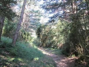 Camino de Canfranc