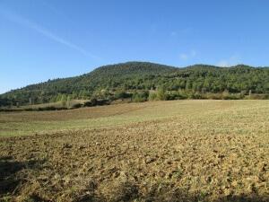 Camino de Arués. Campos de cultivo
