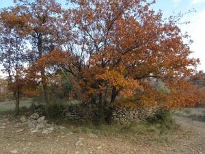 Camino de Montañana. Antiguos caminos