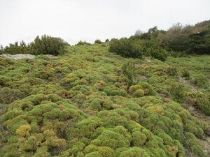 Sierra de Bonés. Un escarpín dominante