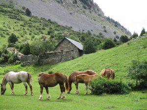 Llanos de La Larri