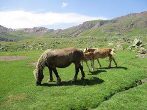 Caballos en las praderas de Anayet
