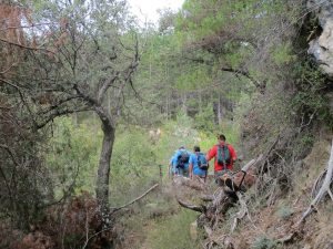 Senda de subida a la Sierra de Torón