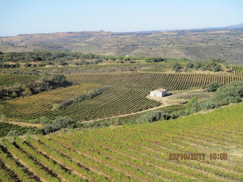 Sierra de la Candelera. Plantación de viñedos