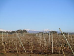 Campos de viñedos en Azara