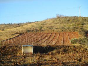 Paniza. Campos de viñedos