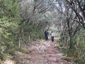 Camino de Almazorre
