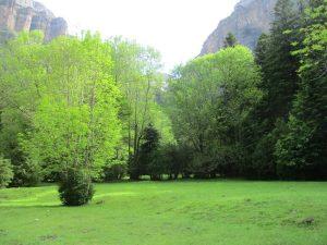 Mucho verde camino de la Cola de Caballo