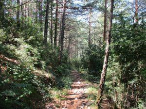 Camino de Mataire