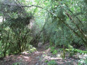 Bosque de Rabaltueras