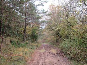 Jánovas. Camino Lacort y Albella