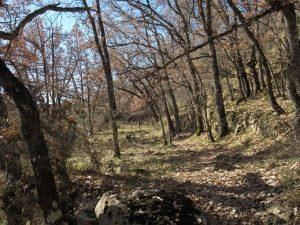 Antiguos bancales, camino de Raluy