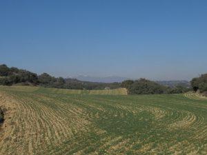 Llanos del Somontano