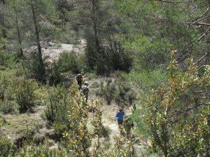 Camino de Used a Aspés
