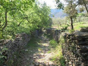 Caminos de Lecina