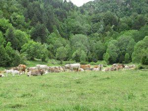 Vacada en el desvío Valle de Otal