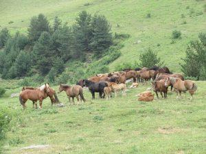 Valle de Guarrinza. Caballos pastando