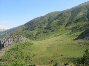 Valle de Guarrinza. Pastos