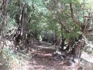 Camino de entrada en Obís