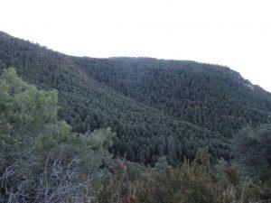 Laderas del Pico Campanué