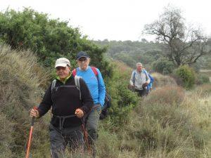 Camino de La Almunia del Romeral