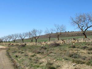 Camino de Almudévar