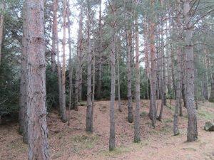 Bosque subiendo al ibón
