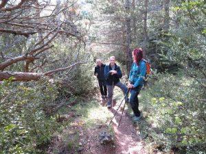 Senda por el interior del bosque