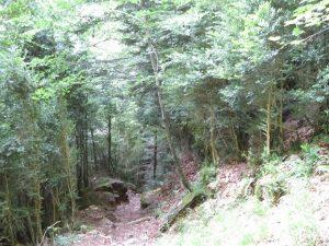 Bosque Cañón de Añisclo