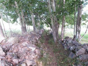 Camino ermita Vigen de Turbiné