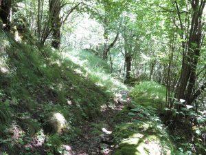 Sendero entre Siscarri y el río Baliera