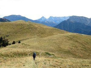 Tasca alpina, junto al Comodoto
